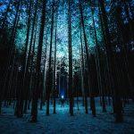 Schnitzeljagdt nachts im Wald in Freiburg